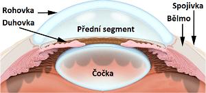 Jak vypadá přední segment oka.